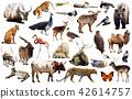asia animals isolated 42614757
