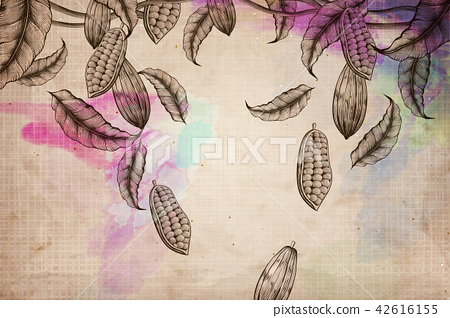 Cacao plant background 42616155