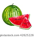 Watermelon fruit painting.Painted with watercolor. 42625226