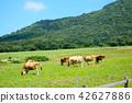 여름, 소, 우 42627886