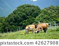 여름, 소, 우 42627908