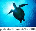海龜 海底的 海裡 42629988