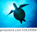 海龟 42629988