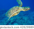 海龟 42629989