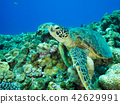 海龟 42629991