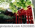 日本神社枫叶 42630885