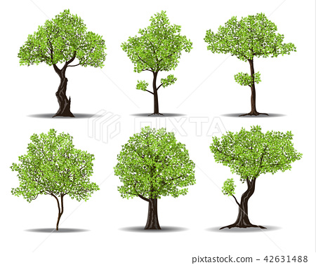 green tree 42631488