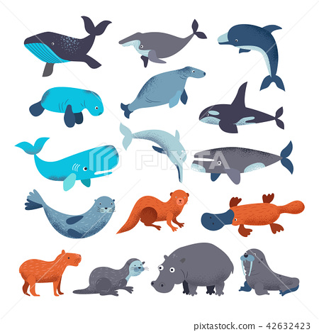 Sea mammal vector water animal character dolphin walrus and whale in sealife or ocean illustration 42632423