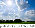 見沼 논과 여름 하늘 42635340