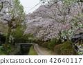 ฤดูใบไม้ผลิ,ดอกไม้,ดอกซากุระบาน 42640117