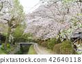 ฤดูใบไม้ผลิ,ดอกไม้,ดอกซากุระบาน 42640118
