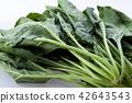 시금치, 야채, 채소 42643543