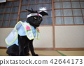 A photograph of a black cat who is playing cosplay (Momotaro) 42644173