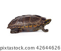turtle on white background 42644626