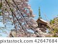 ทัศนียภาพ,ภูมิทัศน์,ประเทศญี่ปุ่น 42647684