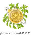 stevia, tea, vector 42651272