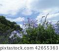 ดอกไม้,ท้องฟ้าเป็นสีฟ้า,ฤดูร้อน 42655363