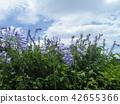 蓝天和白色云彩和爱情花蓝色花 42655366