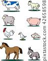 가축, 흰색 배경, 흰 배경 42658598