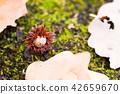 도토리, 낙엽, 고엽 42659670