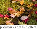 falling, leafe, fallen 42659671