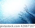 水生的 水下 在水中 42667167
