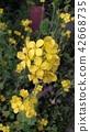 ดอกไม้ข่มขืน 42668735