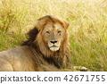 lion 2 42671755