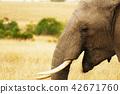 face of elephant 42671760