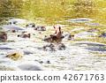 hippo pool 42671763