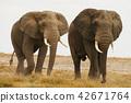 2 elephants 42671764