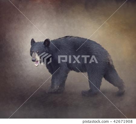American Black Bear 42671908