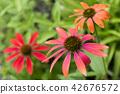 꽃, 플라워, 꽃잎 42676572