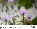 꽃, 플라워, 퍼플 42676580