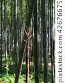 죽순, 죽림, 대나무 숲 42676675