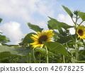 向日葵黃色花與各種各樣的花的 42678225