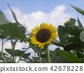 向日葵黃色花與各種各樣的花的 42678228