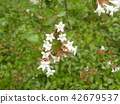 ดอกไม้,ฤดูร้อน,หน้าร้อน 42679537