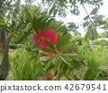 ดอกไม้,ฤดูร้อน,หน้าร้อน 42679541