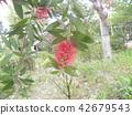 ดอกไม้,ฤดูร้อน,หน้าร้อน 42679543