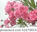 ดอกไม้,ฤดูร้อน,หน้าร้อน 42679654
