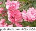 ดอกไม้,ฤดูร้อน,หน้าร้อน 42679656