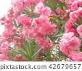 ดอกไม้,ฤดูร้อน,หน้าร้อน 42679657