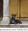A black dog lying at poor house 42681925