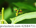 Black grasshopper on leaf 42684731