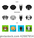 Dog, breed, St. 42687654