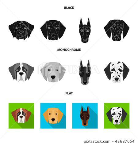 Muzzle of different breeds of dogs.Dog of the breed St. Bernard, golden retriever, Doberman 42687654