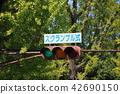 """交通信號燈,顯示""""擾亂類型""""。 (爭奪交叉點) 42690150"""