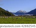 紐西蘭 新西蘭 風景 42692545