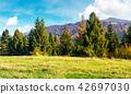 meadow, spruce, hill 42697030